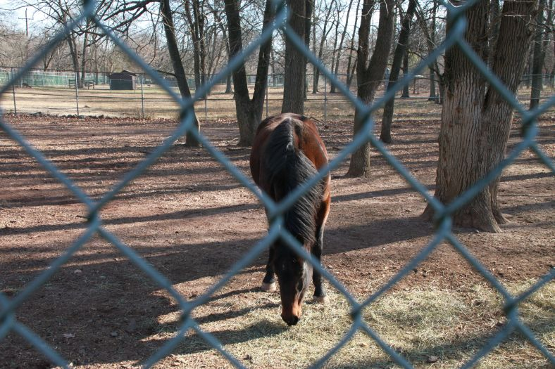 Horse Through Fence